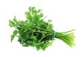 Bunch of parsley on a white background Stock Photography