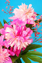 Bunch of peony Royalty Free Stock Photo