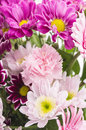 Bunch with pink flowers floral background close up Stock Images