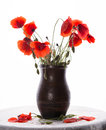 Bunch of poppies in vase on a white background Royalty Free Stock Photography