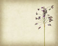 Bunch of purple flower on grunge background Royalty Free Stock Photo