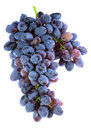 Bunch of purple grapes Royalty Free Stock Photo