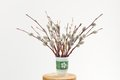 Bunch of pussy willow twigs in green vase on white background Royalty Free Stock Photo