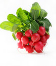 Bunch of radishes Royalty Free Stock Photo