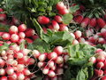 Bunch of radishes Royalty Free Stock Photos