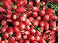 Bunch of radishes Stock Image
