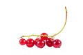 Bunch of red currant isolated on white background Royalty Free Stock Photo