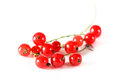 A bunch of red currant Royalty Free Stock Photo