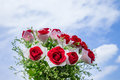 A bunch of red rose flowers with blue sky background Royalty Free Stock Photography