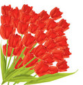 Bunch of red tulips. Royalty Free Stock Photography