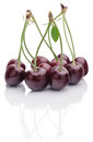 Bunch of ripe cherries Royalty Free Stock Photo