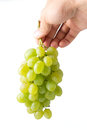 Bunch of ripe grapes in woman's hand Royalty Free Stock Photo