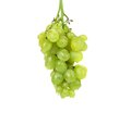 Bunch of ripe and juicy green grapes close up on a white background Stock Images