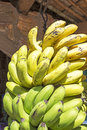 Bunch of ripened bananas Royalty Free Stock Photo