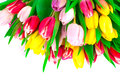 Bunch of spring tulips Stock Image