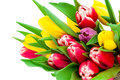 Bunch of spring tulips Royalty Free Stock Images