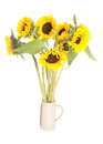 Bunch of sunflowers Royalty Free Stock Photo