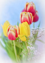 Bunch tulip flowers table Stock Photography