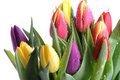 Bunch of tulips Stock Photography