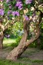 Choque de violeta lila flor