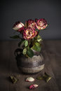 Bunch of withered roses in a vase