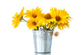 Bunch of yellow daisy flowers Royalty Free Stock Photo