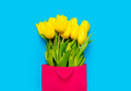Bunch of yellow tulips in cool shopping bag on the wonderful blu Royalty Free Stock Photo