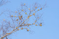 Bunch of yellowhammer birds sitting on tree Stock Images