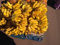 Bunches of banana Royalty Free Stock Photo