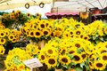 Sunflowers on a market stall Royalty Free Stock Photo