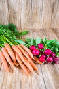 Bunches of carrots and radishes Royalty Free Stock Photo