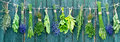 Bunches of different herbs herb hanging on line with wooden background Stock Photography