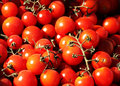 Bunches of fresh cherry tomatoes a lot wonderful at the market landscape cut Royalty Free Stock Photos