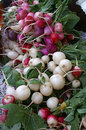 Bunches of fresh radishes freshly harvested at market Stock Image