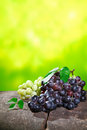 Bunches of fresh red and white grapes outdoors on a stone wall conceptual of either farm fresh table grapes or of cultivars at a Royalty Free Stock Image