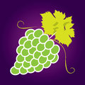 Bunches of grapes. Vector Stock Photo