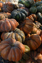 Bunches of Multicolored Pumpkins Royalty Free Stock Photos