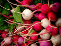 Bunches of multicolored radishes. Stock Images