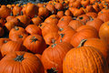 Bunches of Pumpkins Royalty Free Stock Photos