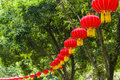 Bunches red lanterns branches tree Royalty Free Stock Image
