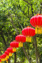 Bunches red lanterns branches tree Stock Photography