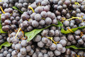 Bunches of red wine grapes pile Stock Image
