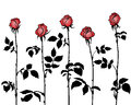 Bunches of roses silhouettes with red petals on white background Stock Photos