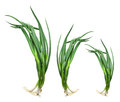 Bunches of spring onions on white background Royalty Free Stock Photography