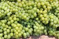 Bunches of white grapes Royalty Free Stock Images