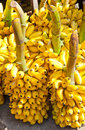 Bunches of yellow bananas Royalty Free Stock Photo