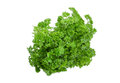 Bundle of curly leaf parsley on a light background Royalty Free Stock Photo