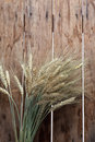 Bundle of the gold wheat ears on wood background Royalty Free Stock Image