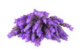 Bundle of lavender flowers isolated on white background Stock Image