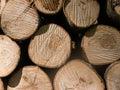 Bundle of wooden logs